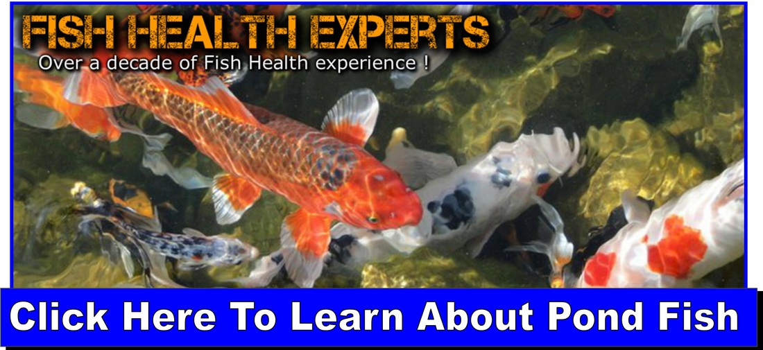 fish health experts
